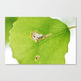 Aspen leaf 2 Canvas Print