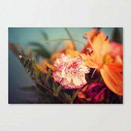 White & Pink Carnation Canvas Print