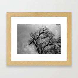 California Black Oak, Yosemite Framed Art Print