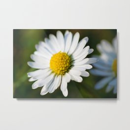 daisys Metal Print