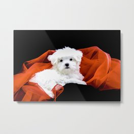 Lancelot the Maltese Puppy with Red Christmas Fabric Metal Print