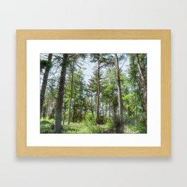 Langsett Forest Framed Art Print