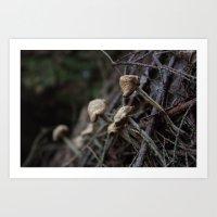 Mushroom II Art Print