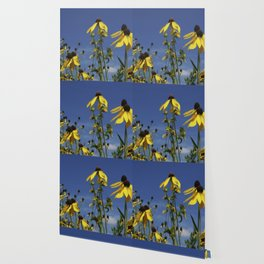 Yellow Coneflower, Ratibida, with azure prairie sky Wallpaper
