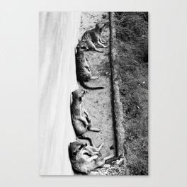 Row of meerkats Canvas Print