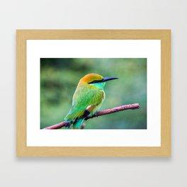 Colourful Bee-Eater Framed Art Print