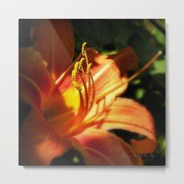Orange Lilly  Metal Print