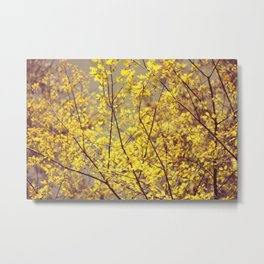 trees yellow leaves Metal Print