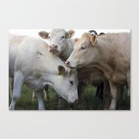 cows Canvas Prints featuring Cows. by wil-ko