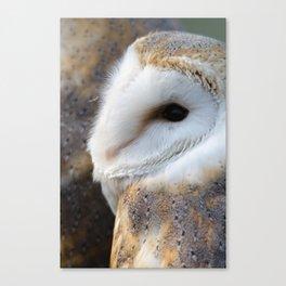 Barn Owl portrait Canvas Print