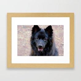 Koda boy Framed Art Print