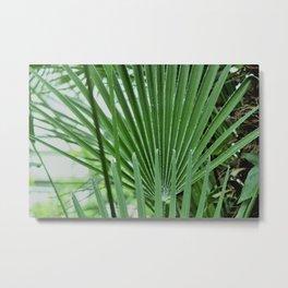 European Palms Metal Print