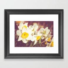 Daffodil flower Framed Art Print