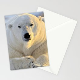 Majestic Giant Adult Polar Ice Bear Sitting On Cold Ground Close Up Ultra HD Stationery Cards