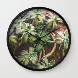 Botanical Gardens Succulent #882 Wall Clock