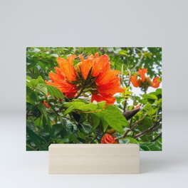Stunning  flowers of African Tulip Tree at a beach in New Caledonia Mini Art Print