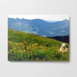 Alpine Sheep Metal Print