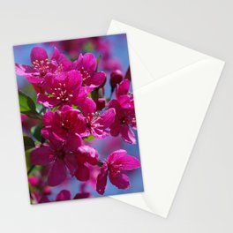 Rosy spring crabapple blossoms - Malus 'Prairifire' Stationery Cards