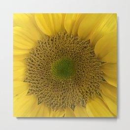 Heart of a Sunflower Metal Print
