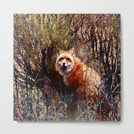Fox And Red Berries Metal Print