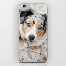 Australian Shepherd iPhone Skin