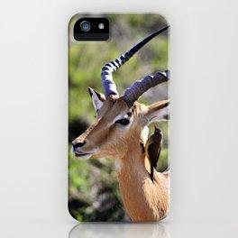 Wildlife Gossip iPhone Case