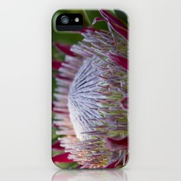 King Protea Island Flowers Jewel of the Garden iPhone Case