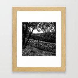 Vineyard in California Black & White Pencil Drawing Photo Framed Art Print