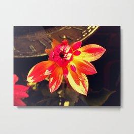 Flower Sundial Metal Print