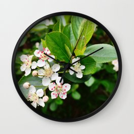 Chokeberry Flowers Wall Clock