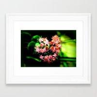 cacti Framed Art Prints featuring Cacti by Chris' Landscape Images & Designs