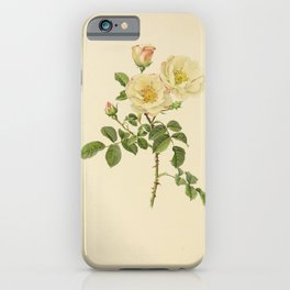 Hebe's Lip, rosa damascena rubrotincta62 iPhone Case