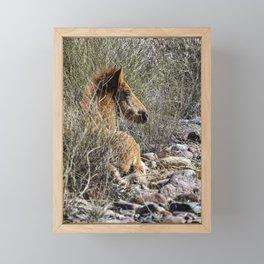 Salt River Foal Finding A Spot to Rest Framed Mini Art Print