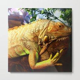 The Iguana Ben. Metal Print