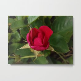 Tiny Rose Square Metal Print