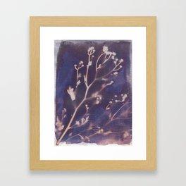 Cyanotype No. 12 Framed Art Print