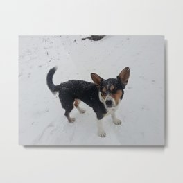 Wallace Snow Metal Print
