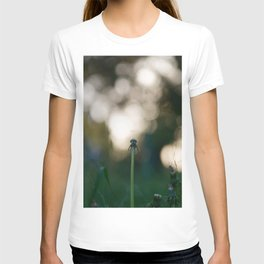 Dandelion blossom defocused T-shirt