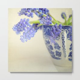 Blue Muscari flowers in a vintage blue and white china cup. Metal Print