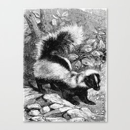 Vintage Skunk Canvas Print