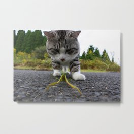 Encounter with the mantis Metal Print