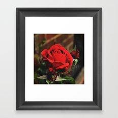 Red Rose Framed Art Print