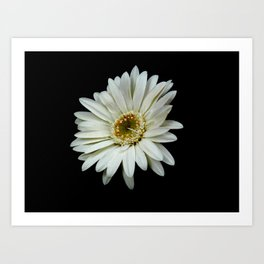 Simple White Flower Art Print