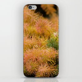 Lovely colors iPhone Skin