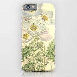Flower 8223 meconopsis sinuata latifolia iPhone Case