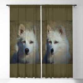 American Eskimo Face Blackout Curtain