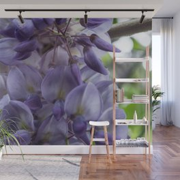 Wisteria sinensis in bloom Wall Mural