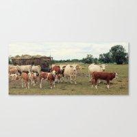 cows Canvas Prints featuring Cows by Falko Follert Art-FF77