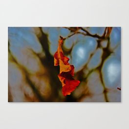 The last leaf standing... Canvas Print