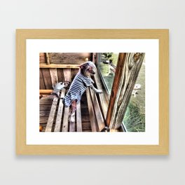 Chinese crested dog on Porch. Framed Art Print